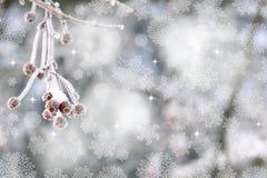 红色莓果在霜雪花冬天背景中 圣诞节例证 免版税库存图片