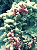 红色莓果葡萄酒童话场面在雪的在Kyiv的中心 免版税库存图片