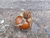 红色莓果被接触的morozom Kislo甜点11月 免版税图库摄影