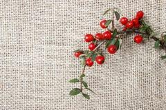 红色莓果(枸子属植物horizontalis)在桌上 免版税图库摄影