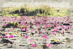 红色莲花海在Nong韩湖国家公园,乌隆他尼的 免版税库存图片