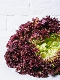 红色莴苣在白色砖墙,在厨房用桌,空间嘲笑上的新鲜的健康沙拉食物背景离开,节食叶子 库存照片