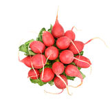 红色萝卜 免版税库存照片