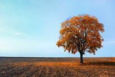红色落的叶子 库存照片