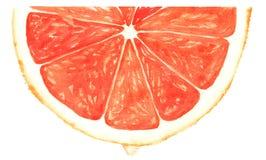红色葡萄柚的段 皇族释放例证