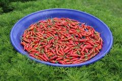 红色蓝色碗的chillis 免版税图库摄影