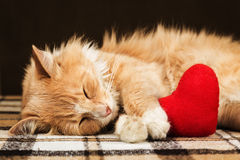 红色蓬松猫睡着的拥抱的软的长毛绒心脏玩具 免版税库存照片
