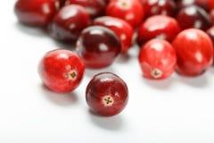 红色蔓越桔果子 免版税库存图片