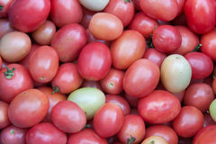 红色蕃茄背景 图库摄影