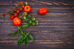 红色蕃茄绿色叶子蓬蒿 库存照片