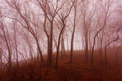 红色薄雾森林 库存照片