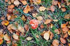 红色蘑菇秋叶和草在土壤 库存图片