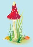 红色蘑菇 免版税库存图片