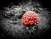 红色蘑菇 库存照片