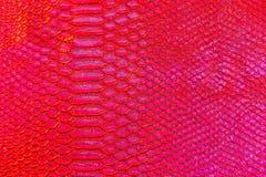 红色蛇或龙标度纹理印刷品 免版税库存图片