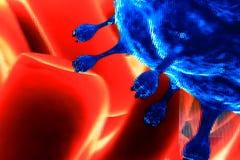 红色血细胞的毒菌 库存图片