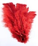 红色被洗染的羽毛 库存照片