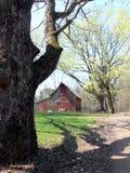 红色谷仓发芽的农厂的槭树 免版税库存图片
