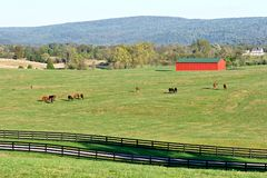 红色谷仓的马 免版税库存图片