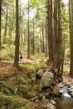 红色走的森林 免版税库存照片