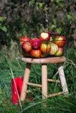红色起动和有机秋天苹果在一个篮子在一张木桌上在果树园 免版税库存图片