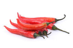 红色辣椒的辣椒 免版税库存图片