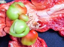 红色辣椒粉在与种子的焦点 免版税库存照片