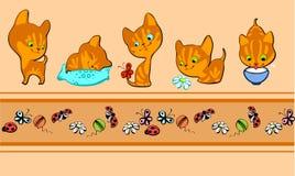 红色边界的小猫 免版税库存照片