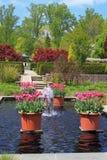红色郁金香在规则式园林里 免版税库存图片