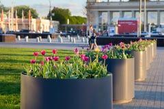 红色郁金香在高尔基公园 免版税库存照片