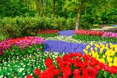 红色郁金香庭院在春天背景或样式中 免版税库存图片