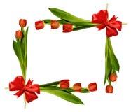 红色郁金香开花,并且丝绸在框架安排鞠躬 库存图片