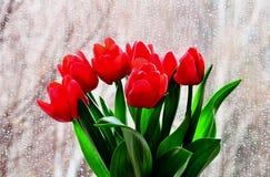 红色郁金香有湿窗口背景 库存图片