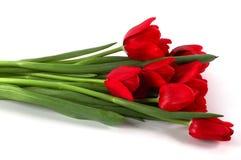 红色郁金香欢乐花束  免版税库存照片