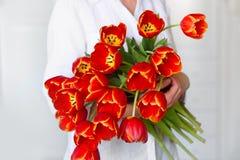 红色郁金香美丽的花束在女孩的手上 免版税库存图片