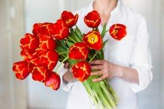 红色郁金香美丽的花束在女孩的手上 库存照片
