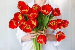 红色郁金香美丽的花束在女孩的手上 免版税库存照片