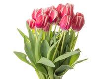 红色郁金香美丽的花束 库存图片