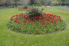 红色郁金香群在圣斯德望的绿色在都伯林爱尔兰 库存照片