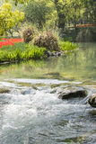 红色郁金香花和小河 库存照片