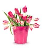 红色郁金香花束在桶的 免版税图库摄影