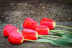 红色郁金香花束在老木背景的 库存照片
