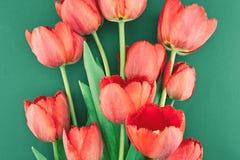 红色郁金香花束在绿色背景的 下雨 库存照片