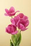 红色郁金香花束 库存图片