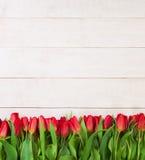 红色郁金香花边界  免版税库存照片