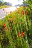 红色野花倾斜 库存照片
