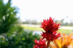 红色野花有模糊的背景 免版税图库摄影