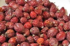 红色野蔷薇 免版税库存图片