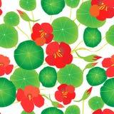 红色金莲花,绿色在白色背景离开 无缝的模式 库存例证
