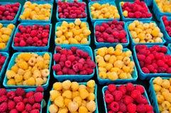红色金黄的莓 免版税图库摄影